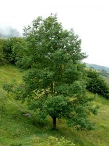 Árboles Sabrados. Un arbol en la ladera de una colina