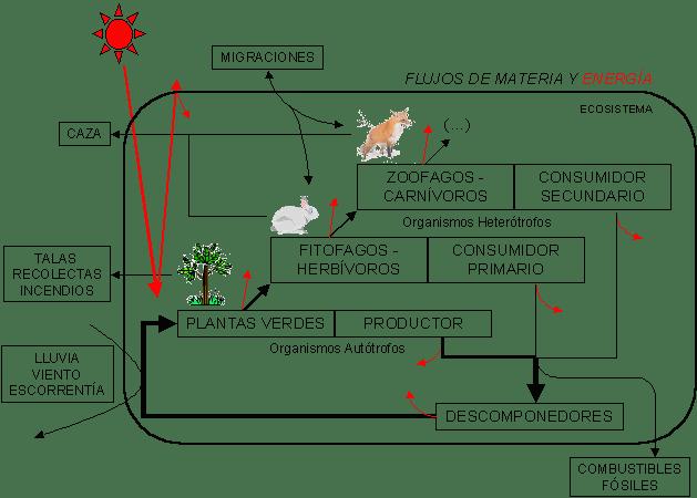 Cadena trófica - Fuente imagen - https://commons.wikimedia.org/wiki/File:Cadena_tr%C3%B3fica.png