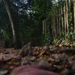 El bosque en casa (Vermicompostadores)