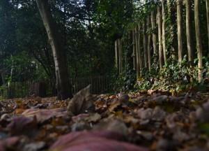 Suelo de bosque lleno de hojas secas con una valla de madera