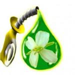 Los combustibles se vuelven bio.