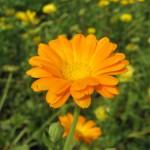 La naturaleza te lo dice con flores