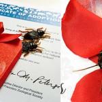 Cucarachas vengadoras