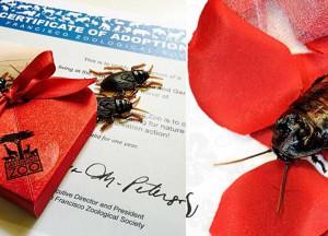 Bautiza una cucaracha con el nombre de tu ex para vengartey ayudar a conservar el medio ambiente