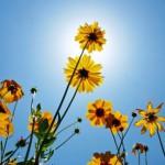 Flores, otro camino hacia un mundo eco-lógico.