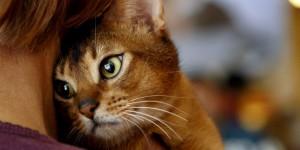 gato-naranja-con-ojos-verdes-mascota