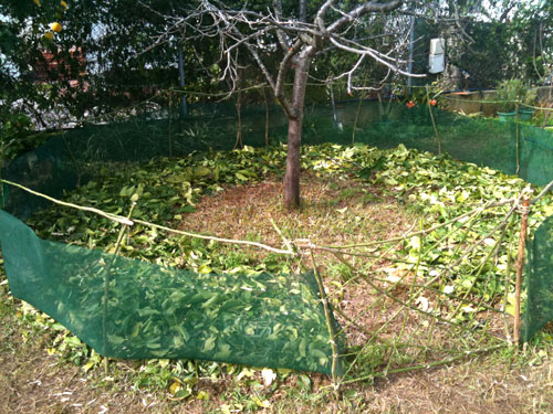 Patatas plantadas en cartón en una huerta