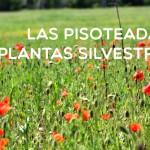 Las pisoteadas plantas silvestres