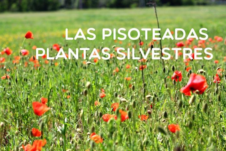 Las pisoteadas plantas silvestes