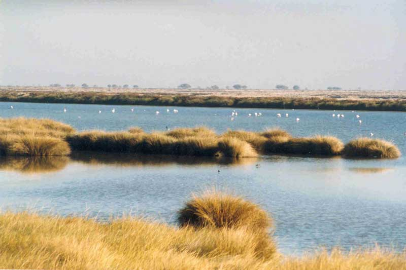 Marismas de Doñana