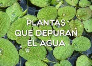 Plantas que depuran el agua