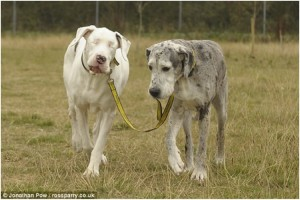perro-guia-ciego