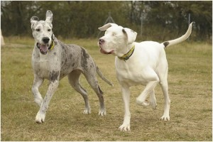 perros-corriendo