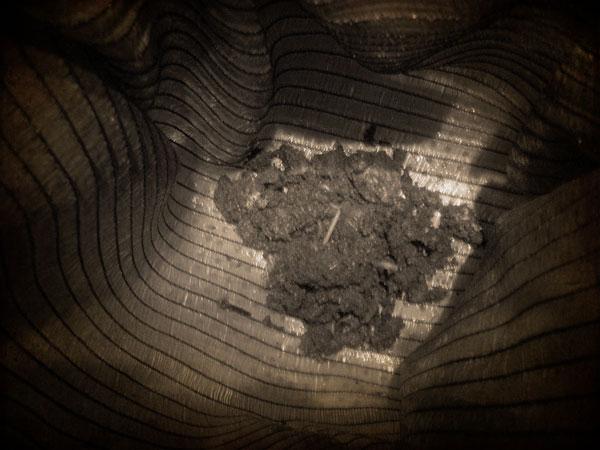 Lombrices en el fondo del vermicompostador casero