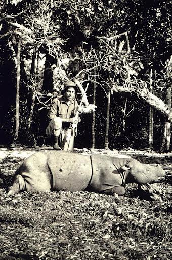 queremos-verde-rinoceronte-java
