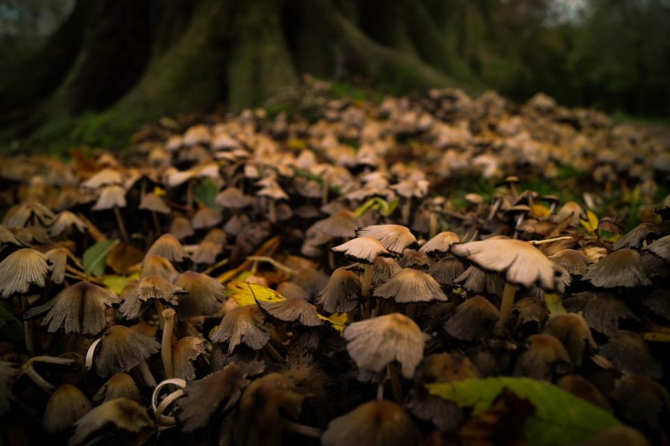 setas creciendo en el suelo del bosque entre hojas