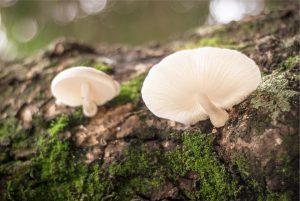 Setas en un tronco con musgo en el bosque